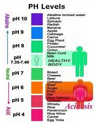Human Body Ph Diagram   Anatomy System - Human Body Anatomy Diagram ...
