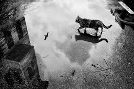 cat in the rain essay poem for today pawprints and raindrops the  cat in the rain by ernest hemingway essay cat in the rain by ernest hemingway gcse