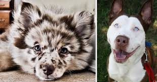 20 crossbreed dogs that will make you fall in love with mutts