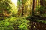 foresty