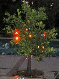 Beautiful Color Ideas Old Fashioned Christmas Lights For Hall Old Style Christmas Tree Lights