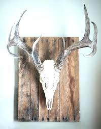 deer head plaque wall mounted