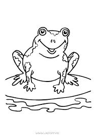 Tranh tô màu con ếch, những chú ếch rất dễ thương và ngộ nghĩnh ✔️Cẩm Nang  Tiếng Anh ✔️