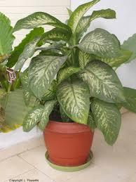 beautiful unique common indoor plants design ideas iel ideas ps