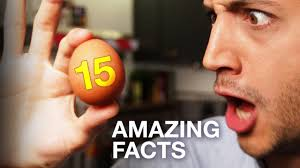 15 Amazing <b>facts about Eggs</b> ! Cooking, Science, Everything ...