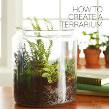 how to make your own terrarium. Plain How How To Make Your Own Terrarium Inside To Y