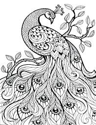 Hard Color By Number Coloring Pages Advanced Cat For Teenagers Hard