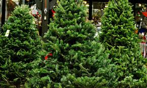 No need to go out on a limb find business story in Christmas trees How Find Business Stories the Tree Industry