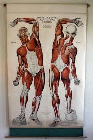 American Frohse Anatomical Charts Key 1918 American Frohse Anatomical Wall Chart Anatomy Human