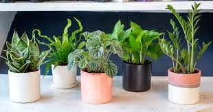 Image Experiment Love Plants But No Sunlight These Plants Can Be Your Best Buddy Balcony Garden Web Love Plants But No Sunlight These Plants Can Be Your Best Buddy