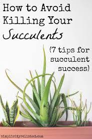 succulent wreath wwwsucculentsandsunshinecom x