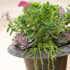 40 Amazing And Easy Outdoor Succulent Garden Ideas For You And Succulent Container Garden Plans