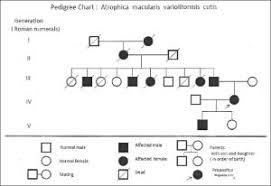 Pedigree Chart Template Template Business
