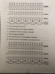 Introduction to transcription including the role of rna polymerase, promoters, terminators, introns and exons. Solved Date Protein Synthesis Worksheet Directions 1 F Chegg Com