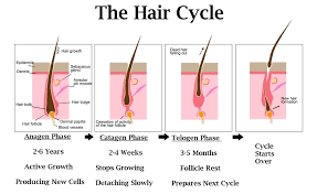 growth cycle hair restoration hair