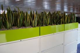 office planter. planters in office google search planter m
