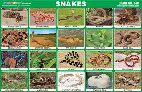Spectrum Educational Charts Chart 140 Snakes