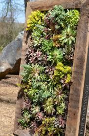 living  how to build a succulent wall garden how to make a garden