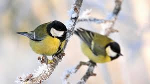 Znalezione obrazy dla zapytania: dokarmianie ptaków ob razki