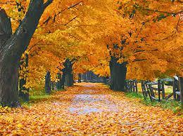 Resultado de imagen de imagenes del otoño