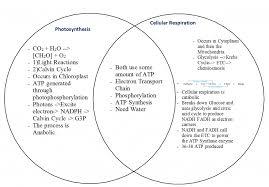 Cellular Respiration And Photosynthesis Venn Diagram Kozen