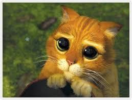 """Résultat de recherche d'images pour """"image chat botté larmoyant"""""""