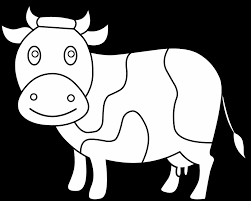 Small Picture Cow Coloring Coloring Pages Eating Grass Surprising Face Page Free