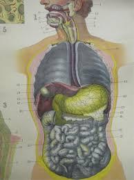 Johnstons Medical Anatomy Charts