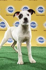 puppy bowl x halftime show.  Puppy Basher Junior Puppy Bowl XIII To X Halftime Show D