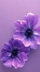Purple Flowers Backgrounds Flower Samsung Galaxy S5 Wallpapers 152 In 2019 Purple