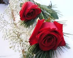 Love Rose Wallpaper Free Download