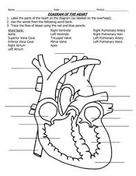 c882e1ec64cae6ee13d43a47a3e3c2db human heart diagram life science 3rd of 6 great b1 revision worksheets from @matther ferriday with on force and motion worksheets