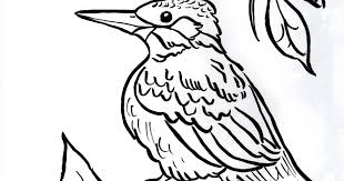 Small Picture Kingfisher Coloring Page Samantha Bell