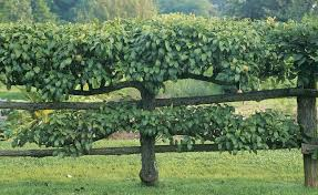 Q U0026 A With Russell Orchards In Ipswich MassachusettsWhen Do You Plant Fruit Trees