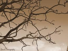 Dried Tree Branches Photograph by BenjieLyn Hemphill