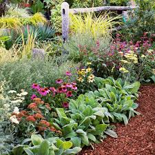fall garden flowers. 8 Flowers To Plant For Instant Fall Color Garden