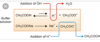 Henderson Hasselbalch Why Does Ph Of A Buffer Solution Change According To