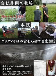 長命庵 韃靼そば 乾麺3人前 国産北海道産の新品種の ダッタンソバ粉
