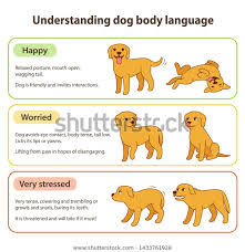 Dog Body Language Infographic Chart Understanding Stock