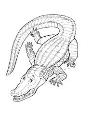 Small Picture Crocodile colouring page Activities Kidspot