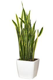 modern office plants. Picture Modern Office Plants P