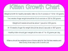 Kitten Size Chart 49 Unmistakable Kitten Growth Chart Weight