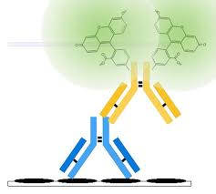 Antinuclear Antibody Ana Understand The Test