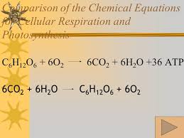 comparison of the chemical equations for cellular respiration and photosynthesis