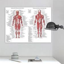 Human Body Muscle Anatomy System Poster Anatomical Chart