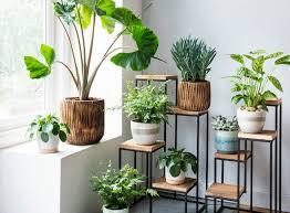 Kamerplanten Op Elke Plek In Huis Intratuin