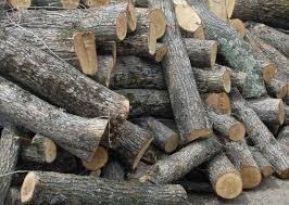 Кримінальне провадження за фактом незаконної порубки дерев в лісових насадженнях Білокуракинського району спрямовано до суду