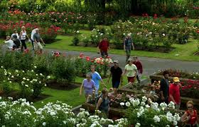 portland tribune file photo the international rose test garden is one of the most popular