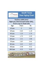 Whitetail Jawbone Aging Chart Looking A Trophy Buck In The Mouth Agrilife Today