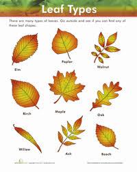 Leaf Types Worksheet Education Com